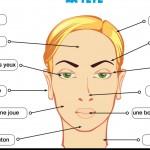 Parties du corps : la tête