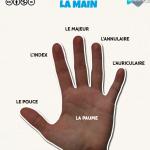 Parties du corps : la main