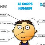 corps_humain